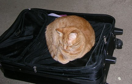 <small><strong>Luggage? What luggage? You mean my cat bed?</strong></small>