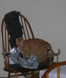 Cat on Bag on Chair